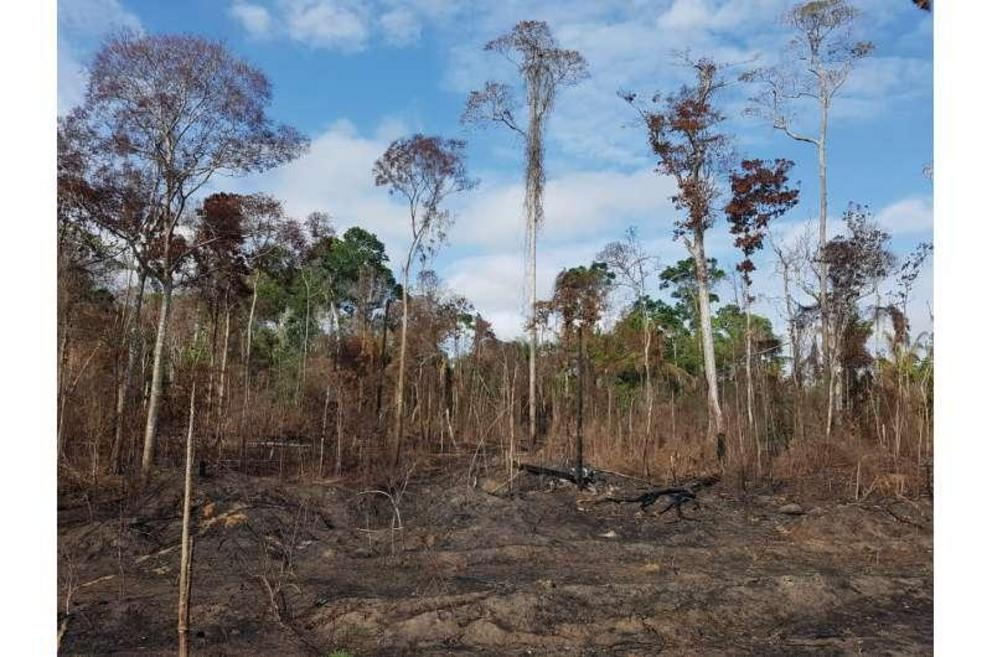 An Amazonian forest that burned during the 2015 El Niño.